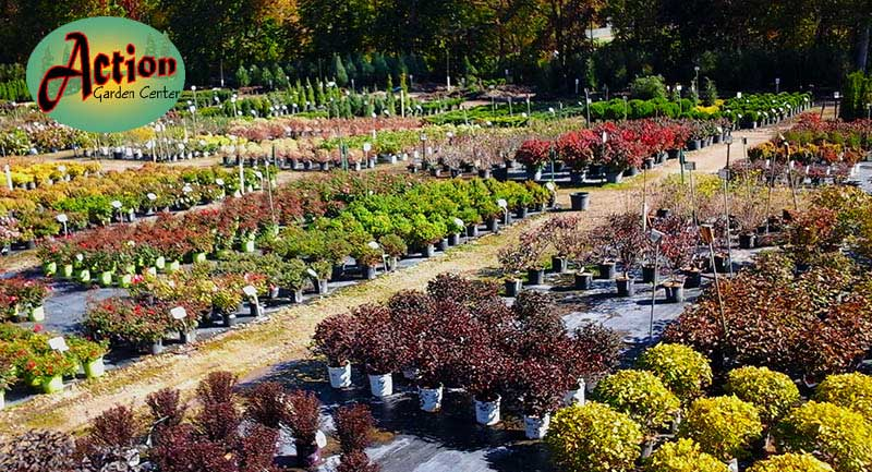 Best Northern Grown Nursery Stock You Can Find